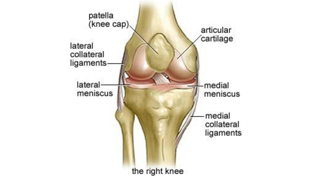 Knee Joint Ppt Download
