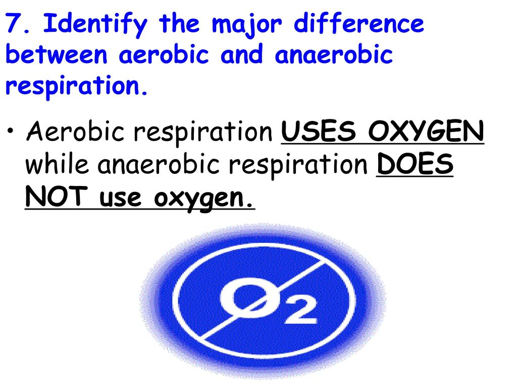 Topic cell processes aim explain the two types of respiration identify the major difference between aerobic and anaerobic respiration ccuart Gallery