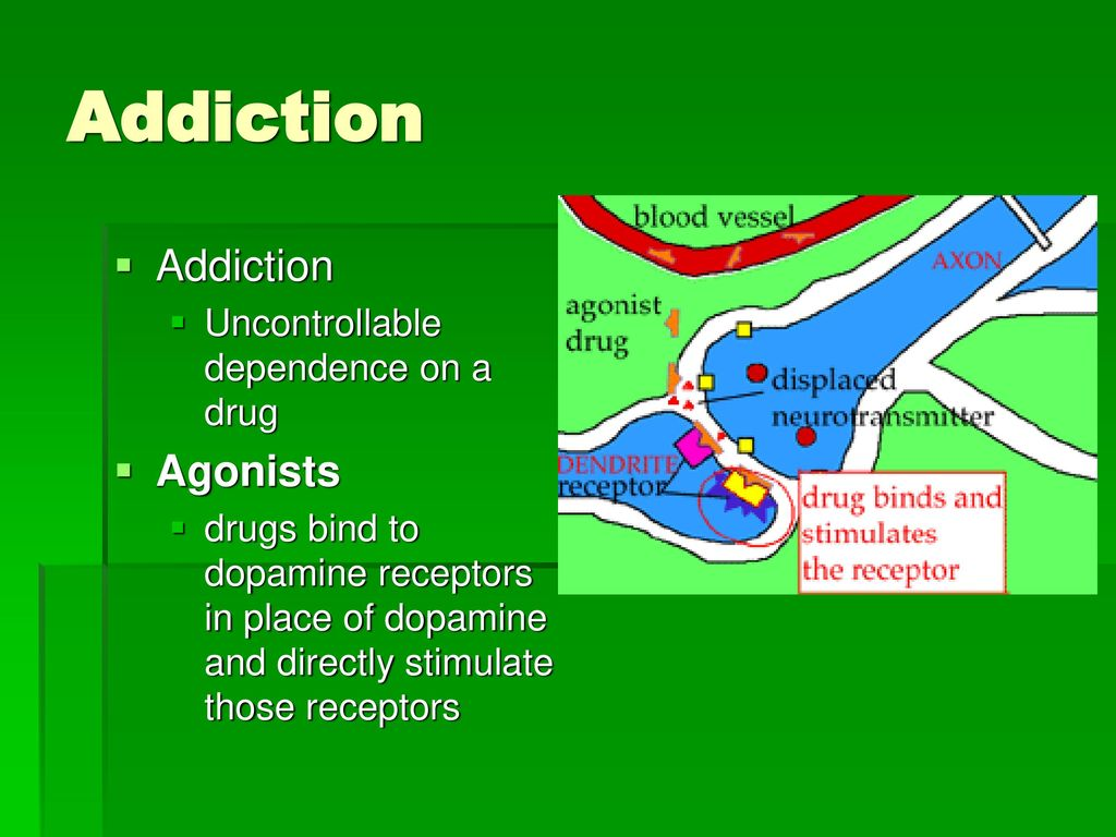 Drugs and The Nervous System - ppt download