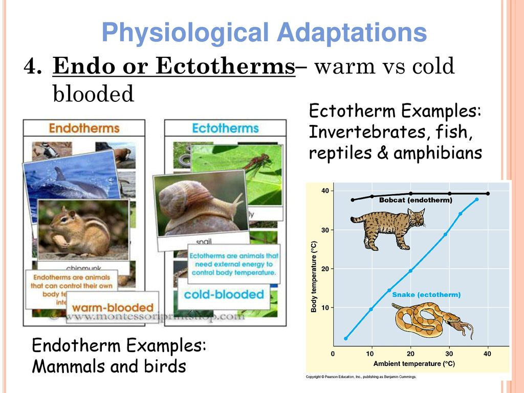 a research on ectotherms and endotherms and their behavioral structural and physiological adaptation Such changes can alter body temperatures (t b) of ectotherms, and thus their physiological performance and vulnerability [8,10,20-24], or heat loads on endotherms [25-28], and thus their energy and water balances.