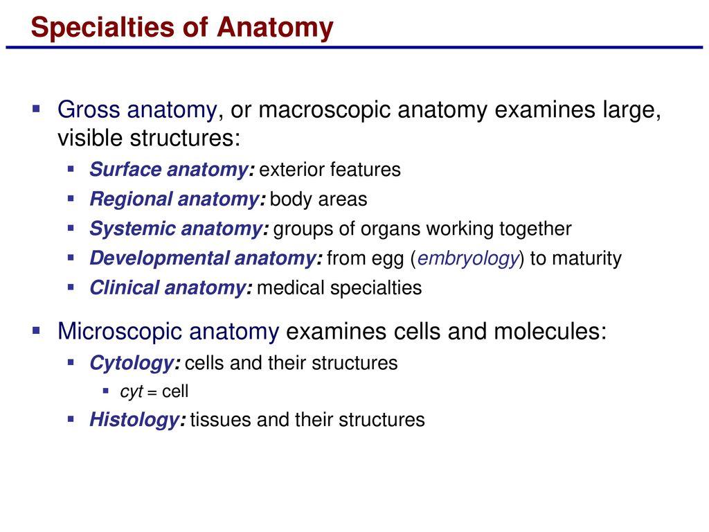 Enchanting Define Developmental Anatomy Pattern - Anatomy and ...