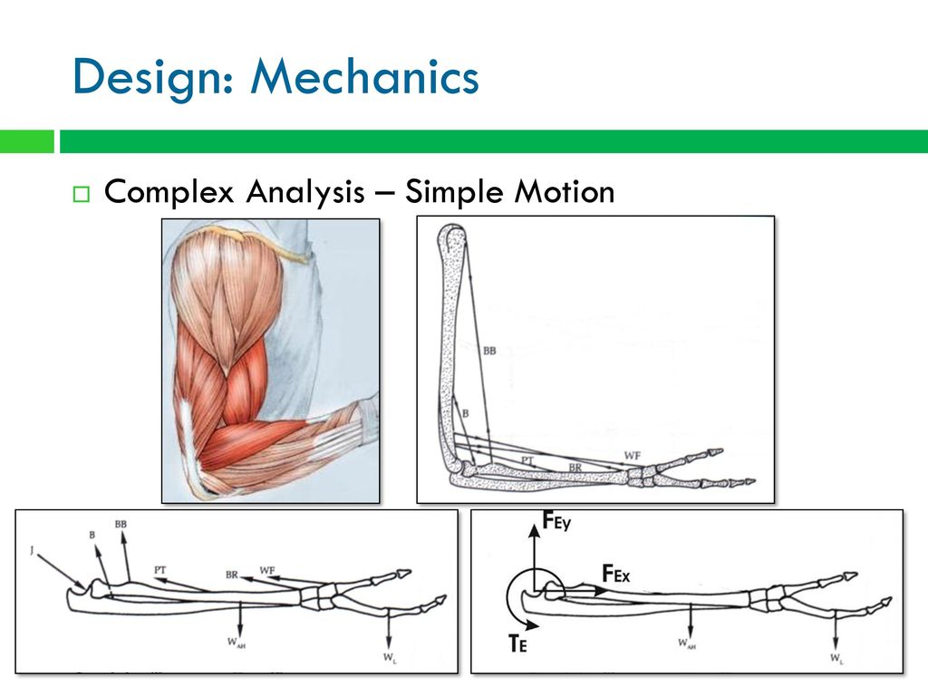 Biomedical Design Biomaterials And Prosthetics Ppt Download Mousetrap Catapult Diagram College Of Arts Sciences 10 Mechanics Complex Analysis Simple Motion