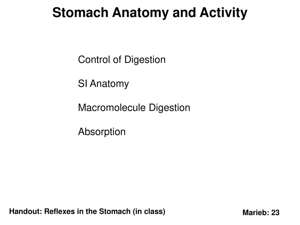 Stomach Anatomy and Activity - ppt download