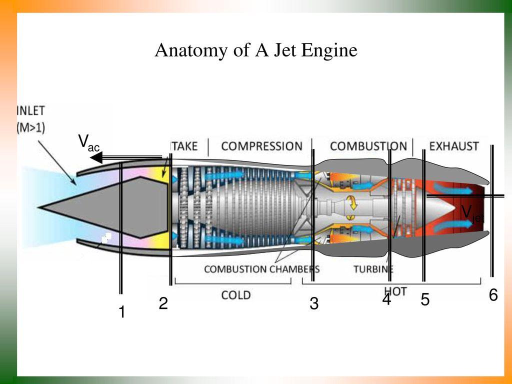 Fancy Anatomy Of Engine Embellishment - Anatomy and Physiology ...