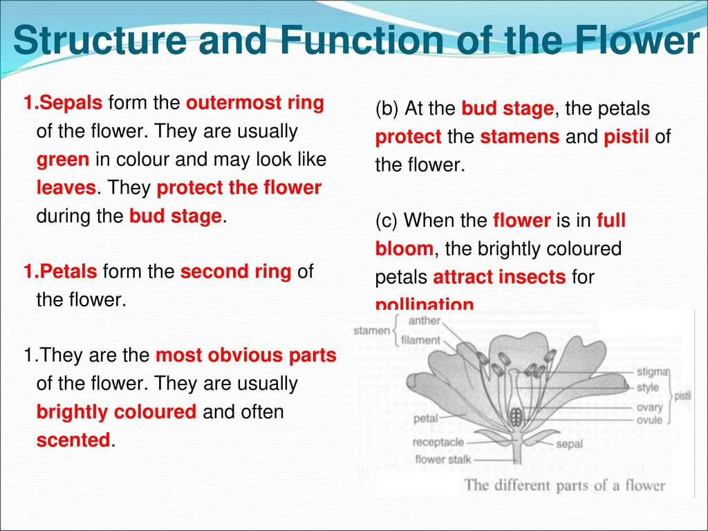 48 sexual reproductive system of flowering plants ppt download structure and function of the flower izmirmasajfo