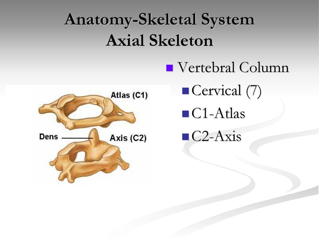 Anatomy-Skeletal System - ppt download