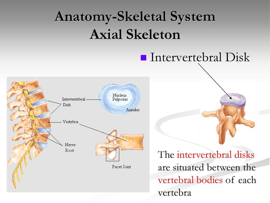 Anatomy-Skeletal System - ppt download