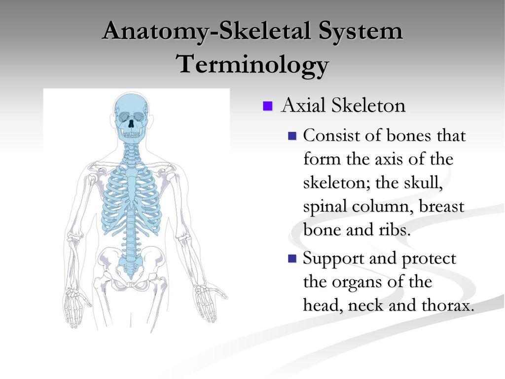 Anatomy Skeletal System Ppt Download