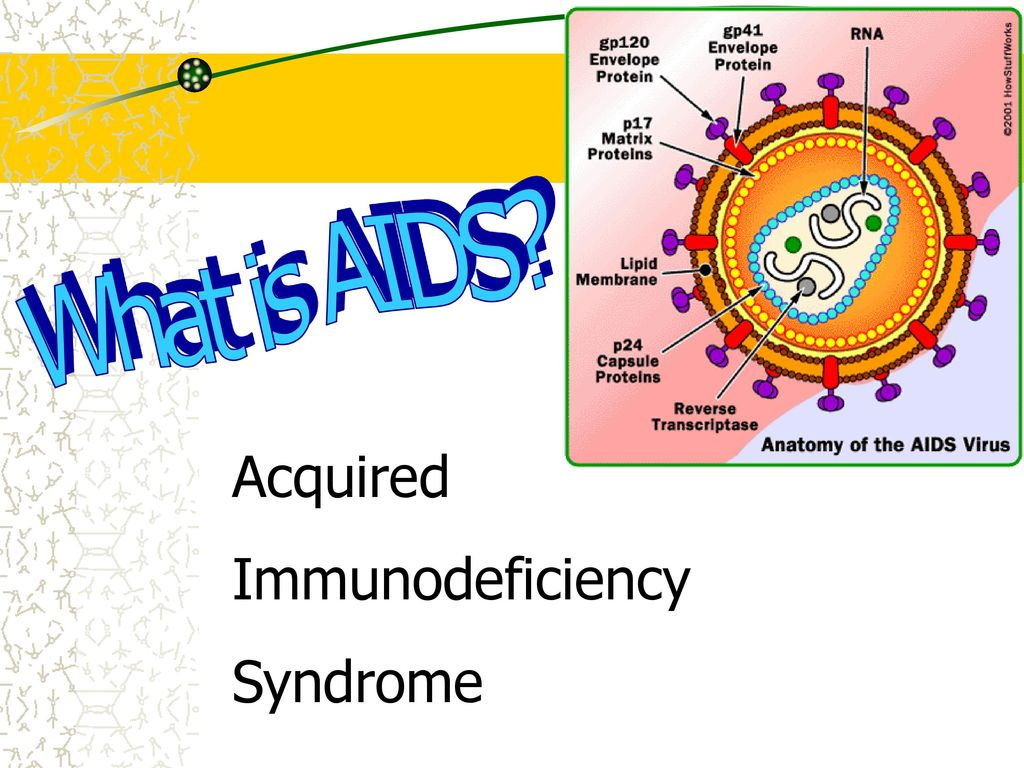 acquired immunodeficiency syndrome aids essay Current trends update: acquired immunodeficiency syndrome (aids) -- united states  as of september 2, 1983, physicians and health departments in the united states and puerto rico had reported 2,259 persons with acquired immunodeficiency syndrome (aids) who.