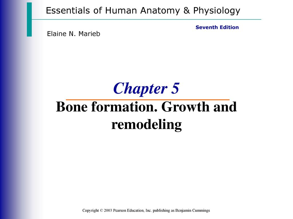 Amazing Essentials Of Human Anatomy And Physiology Seventh Edition ...
