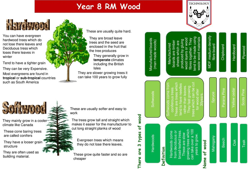 Softwood Year 8 Rm Wood There Are 3 Types Of Wood Name Of