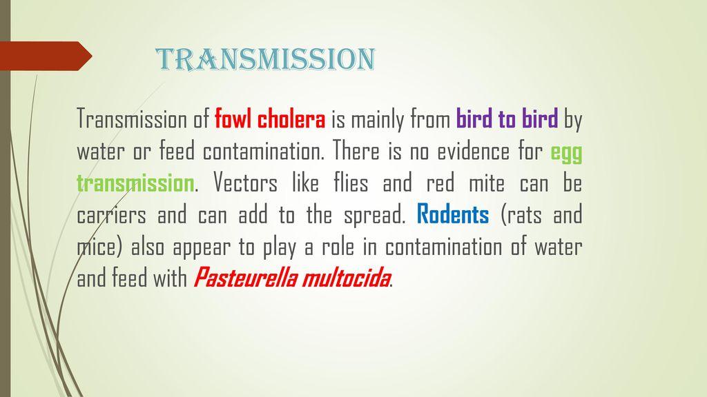 Avian cholera, pasteurellosis, avain hemorrhagic septicaemia.