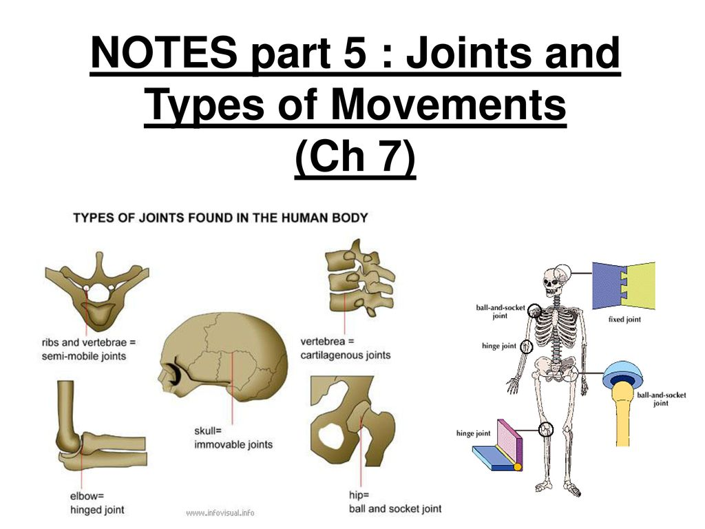 Notes Part 5 Joints And Types Of Movements Ch 7 Ppt Download