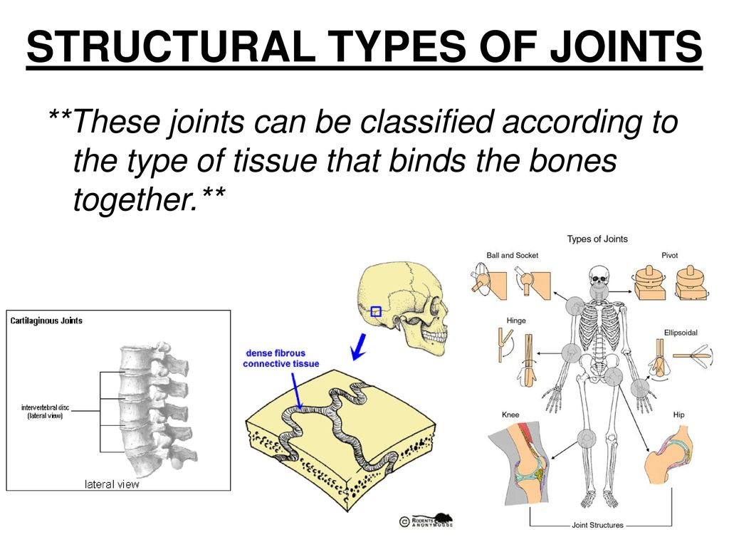 Attractive Types Of Joint Photos - Anatomy and Physiology Tissue ...