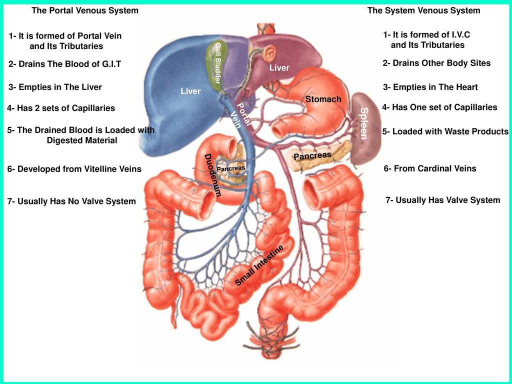 Portal Hypertension Ppt Download