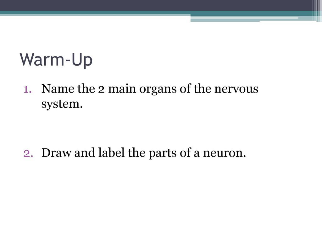 Warm Up Name The 2 Main Organs Of The Nervous System Ppt Download