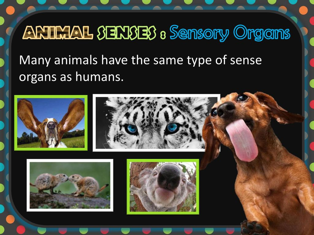 False facts about animals