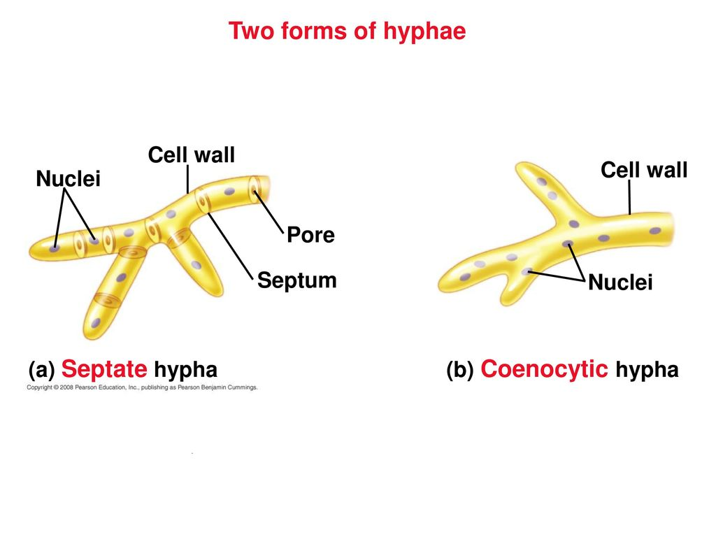 How to make a hypha from a photo