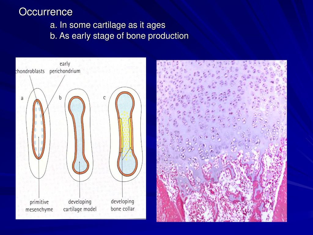Connective Tissue Types Cartilage Ppt Download