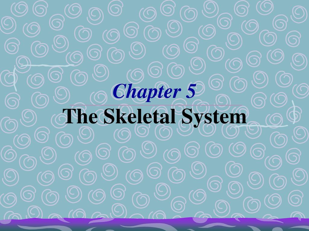 Anatomy Chapter 5 The Skeletal System Packet Answers Image ...