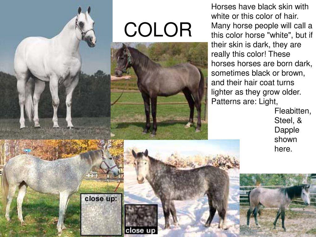 Horse Concentration Colors Ppt Download