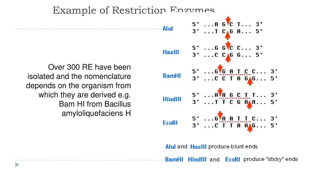 Digestion Of Dna With Restriction Enzymes Ppt Download