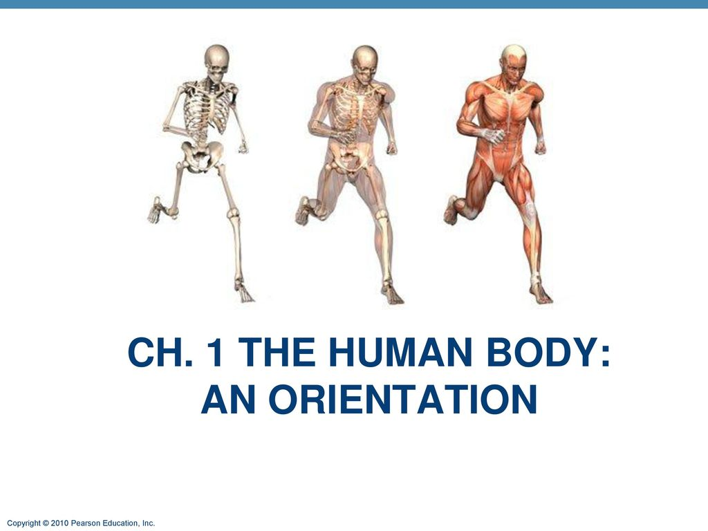 Beautiful Human Anatomy Chapter 1 Model - Anatomy and Physiology ...