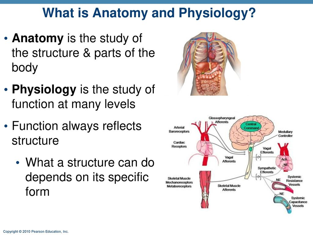 Ch. 1 The Human Body: An Orientation - ppt download