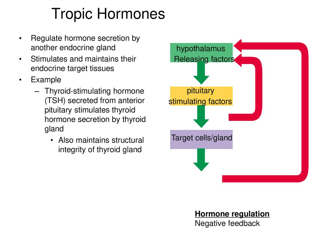 Chapter 18 Principles Of Endocrinology The Central Endocrine Glands Ppt Download Most tropic hormones are secreted by the anterior pituitary. the central endocrine glands