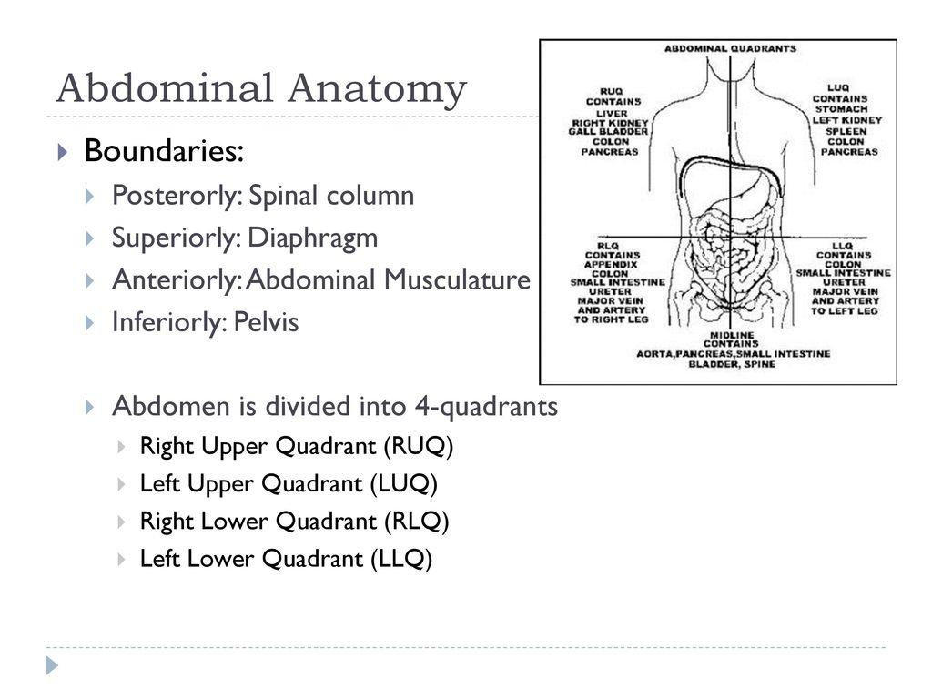 Nice Anatomy Left Upper Quadrant Gallery - Physiology Of Human Body ...