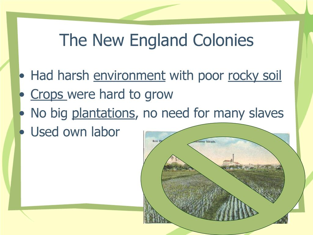 what crops were grown in the new england colonies