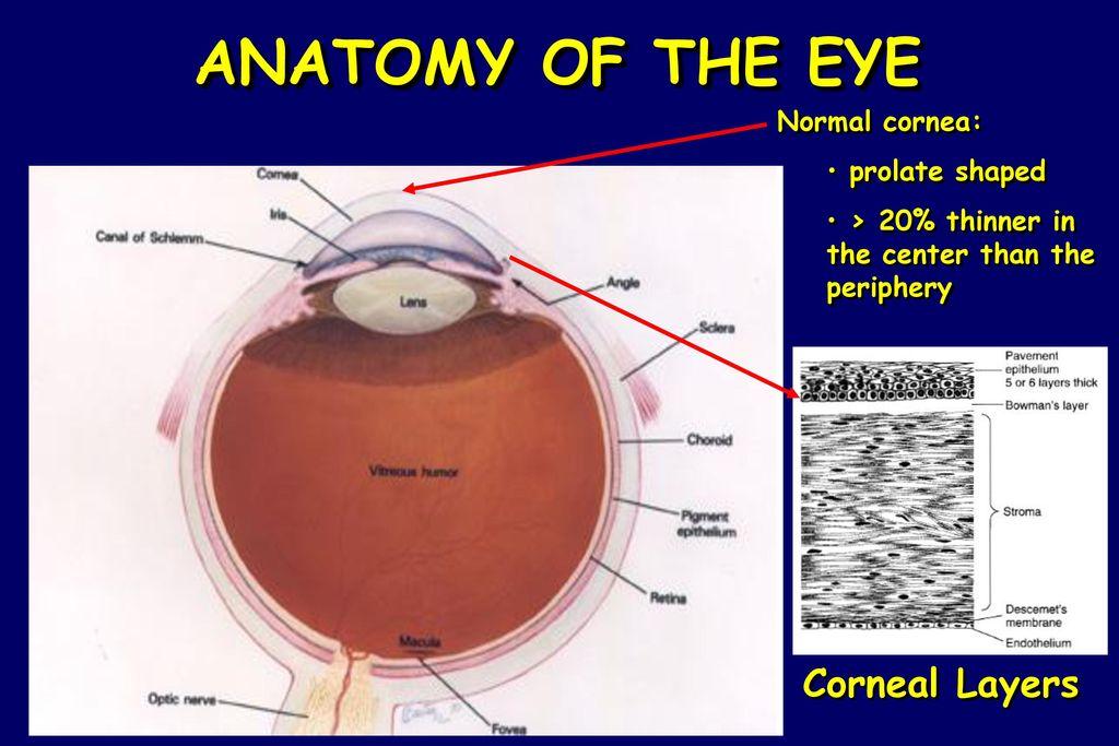 Lsu Eye Center New Orleans La Ppt Download