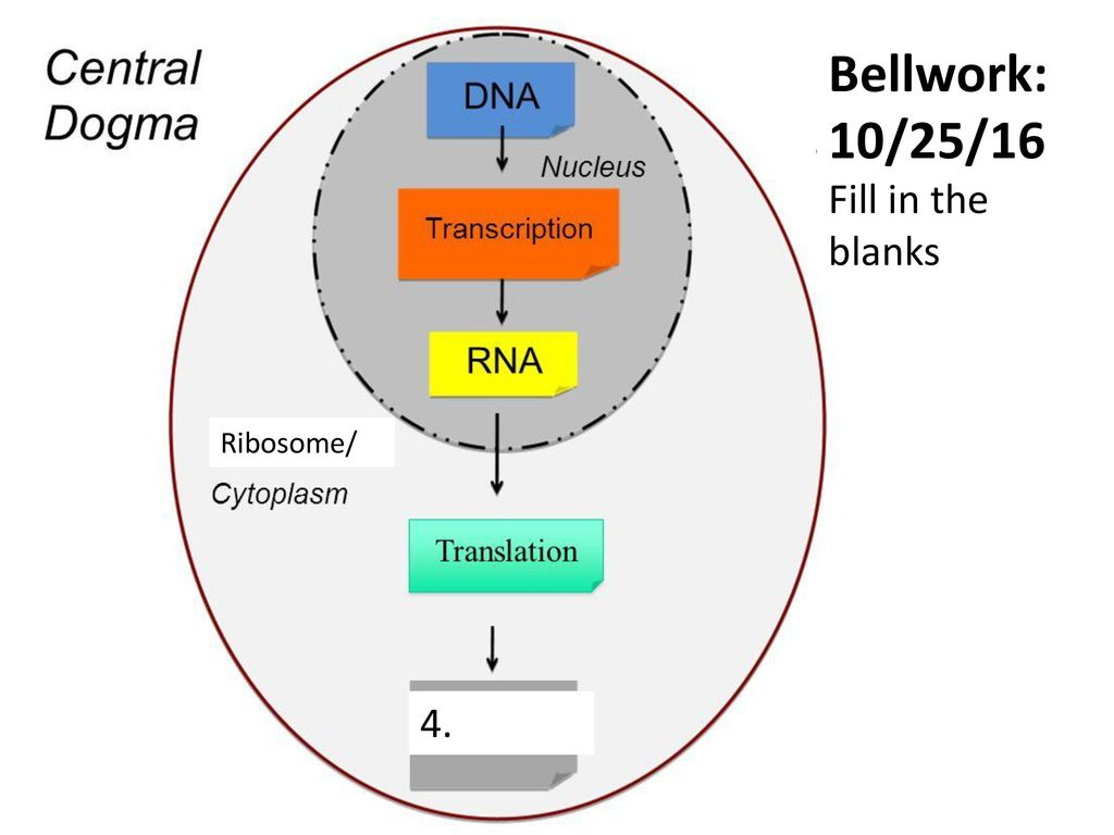 Bellwork%3A+10%2F25%2F16+Fill+in+the+blanks+Ribosome%2F+4. bellwork draw the general shape of the graph and answer the