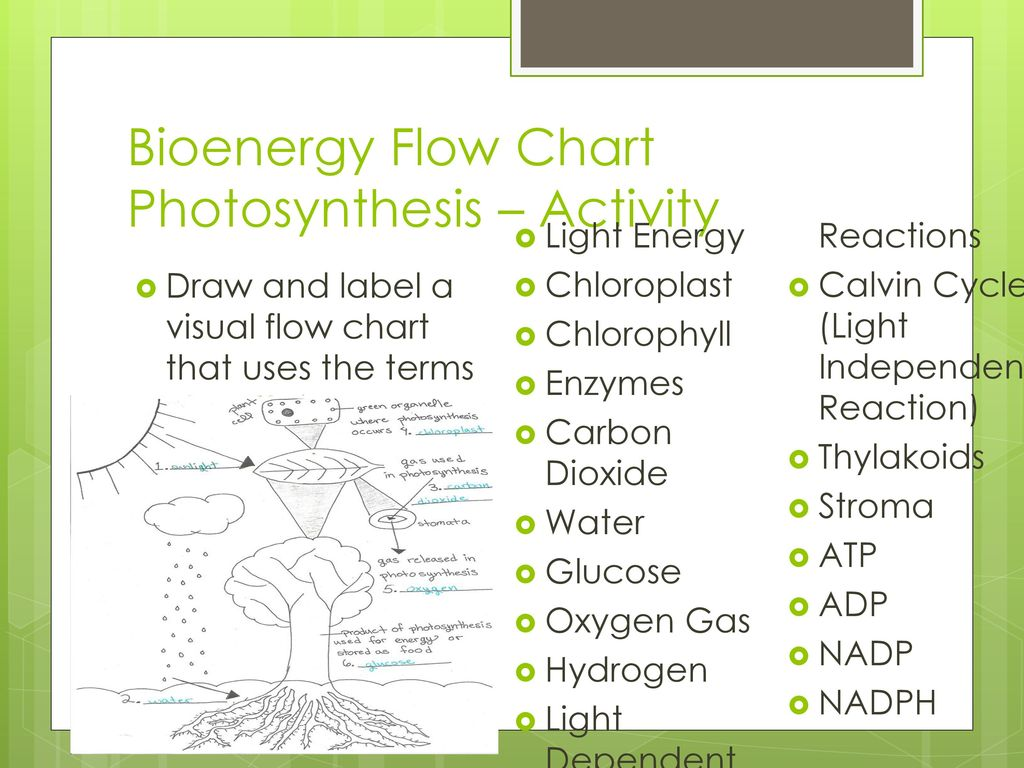 Photosynthesis Ppt Download