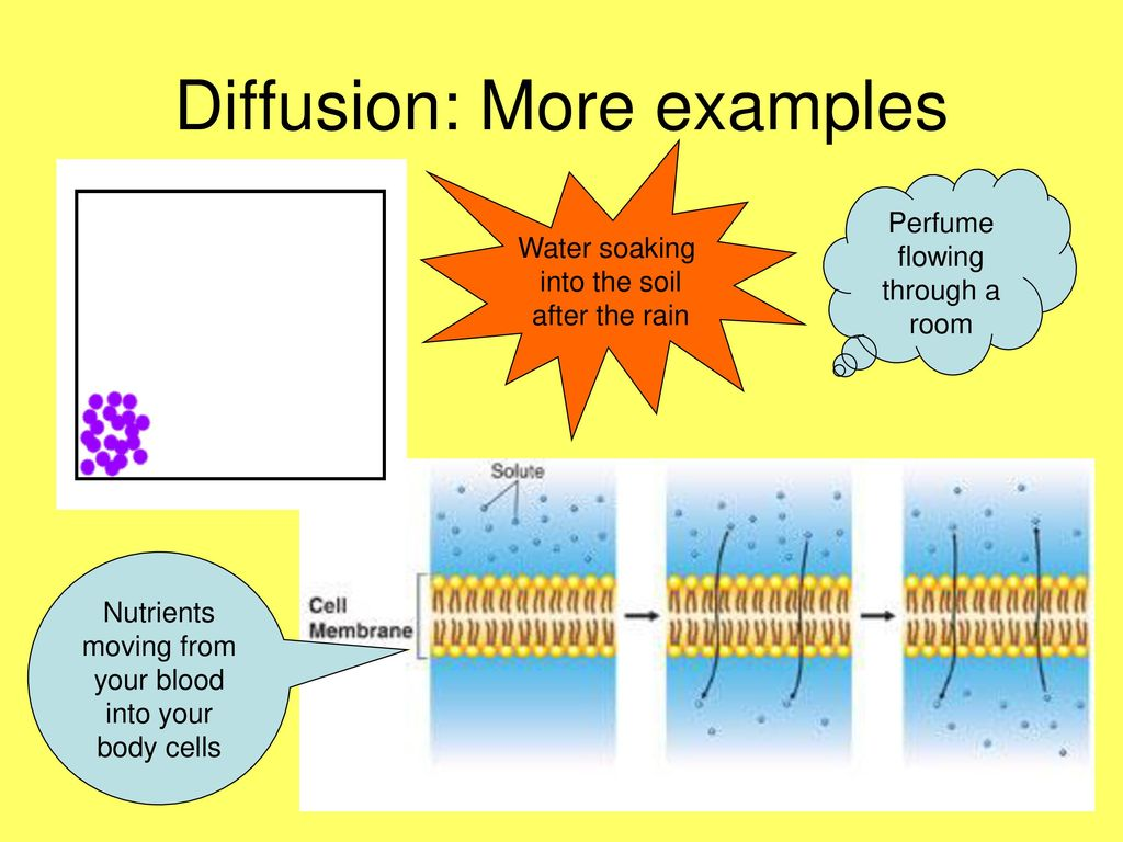 Diffusion: Molecules moving from a high concentration to a low ...