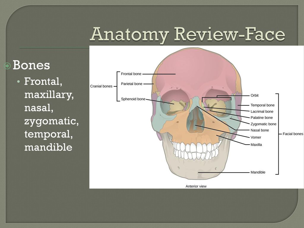 Evaluation of the Face and Related Structures - ppt download