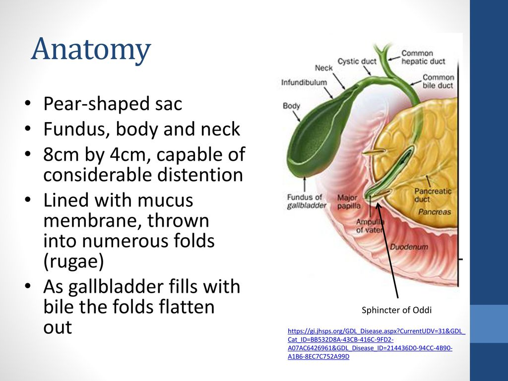 Gall Bladder Disease Cara Campbell. - ppt download