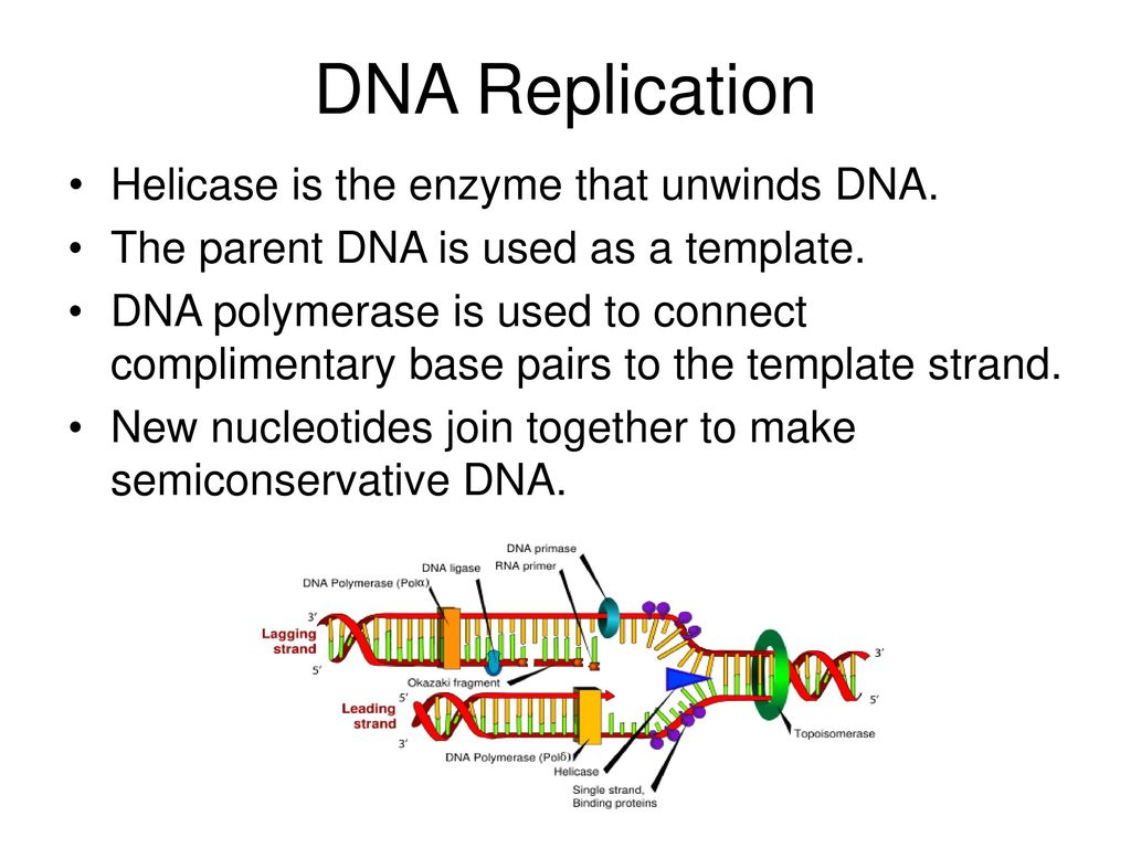 DNA Replication Helicase is the enzyme that unwinds DNA.