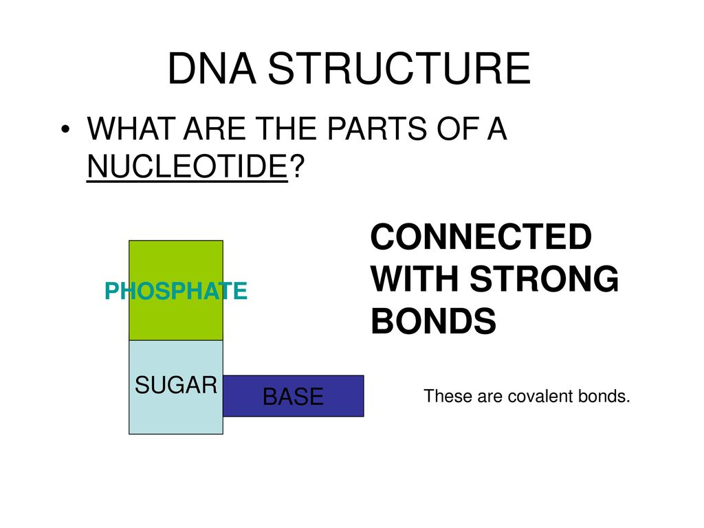 DNA STRUCTURE CONNECTED WITH STRONG BONDS