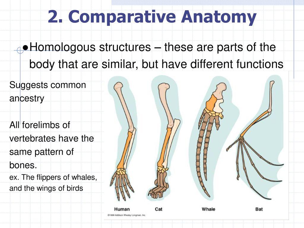 Comparative Anatomy Fishbeck Choice Image - human anatomy diagram organs