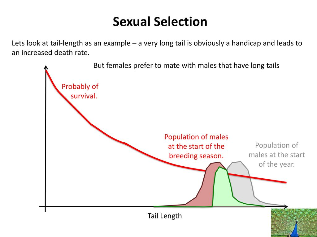 Example of sexual selection in the human population