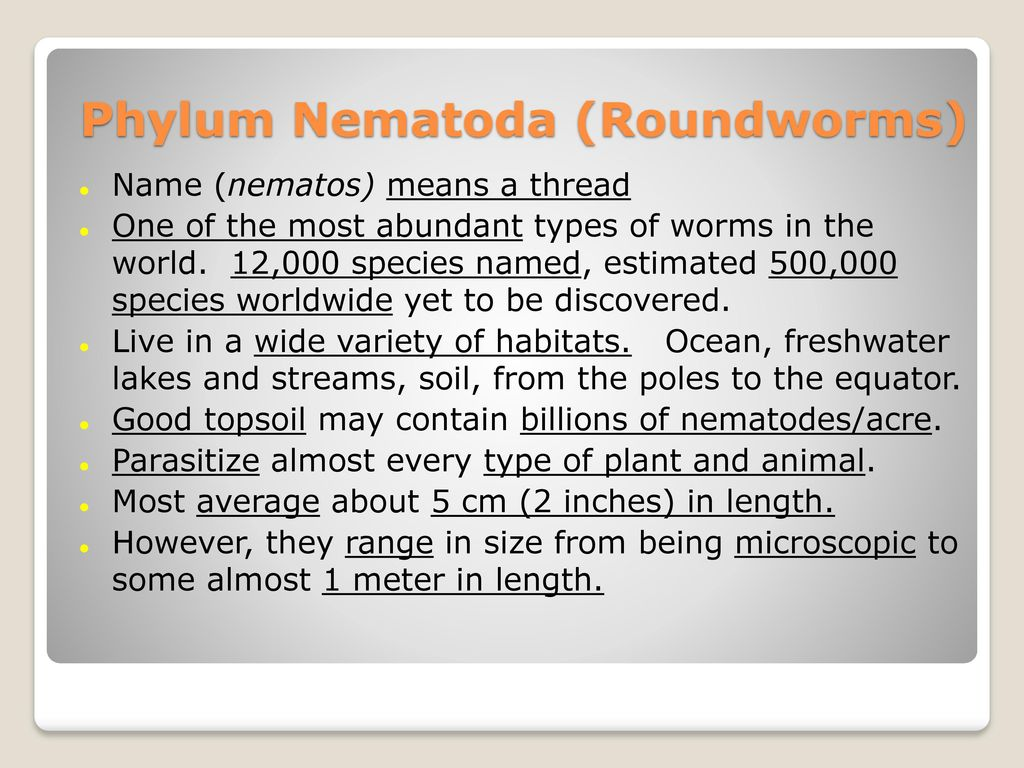 Phylum Nematoda and other Pseudocoelomate Animals, Chapter 9 ...