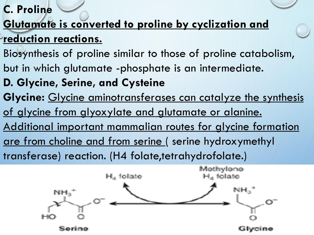 Biosynthesis of the nutritionally nonessential amino acids