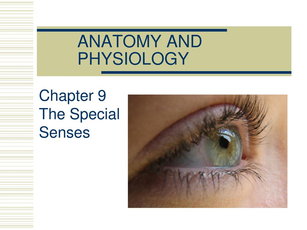 Enchanting Anatomy Chapter 8 Special Senses Motif - Anatomy and ...