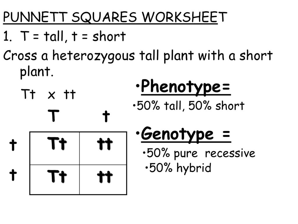 Topic Genetics Aim What Are Punnett Squares Ppt Download