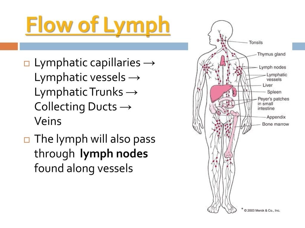 Lymphatic Immune System Ppt Download