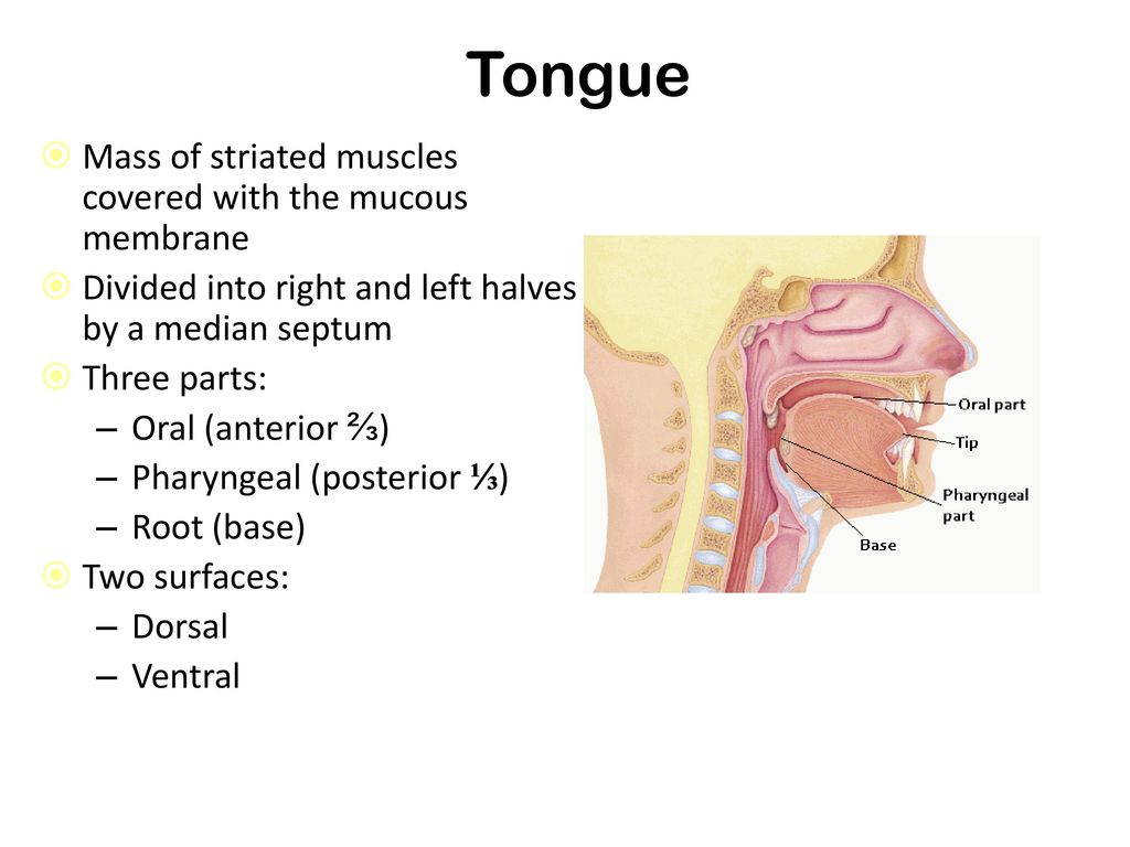 The Tongue Ppt Download