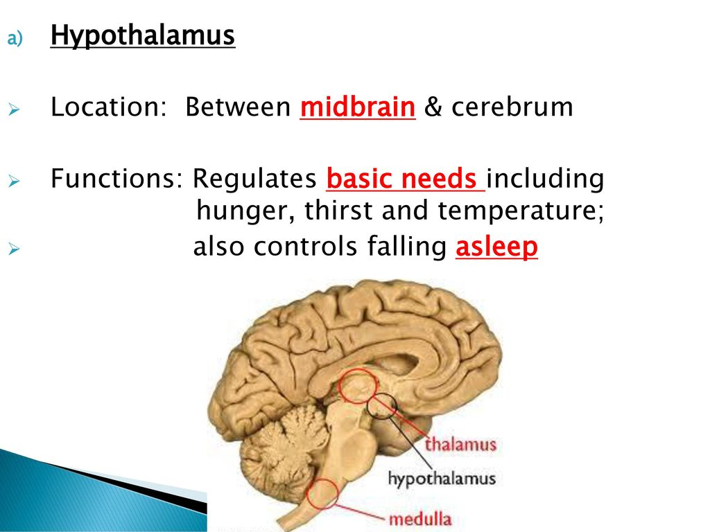 The Human Brain Module One Booklet 5 Did You Know Ppt Download