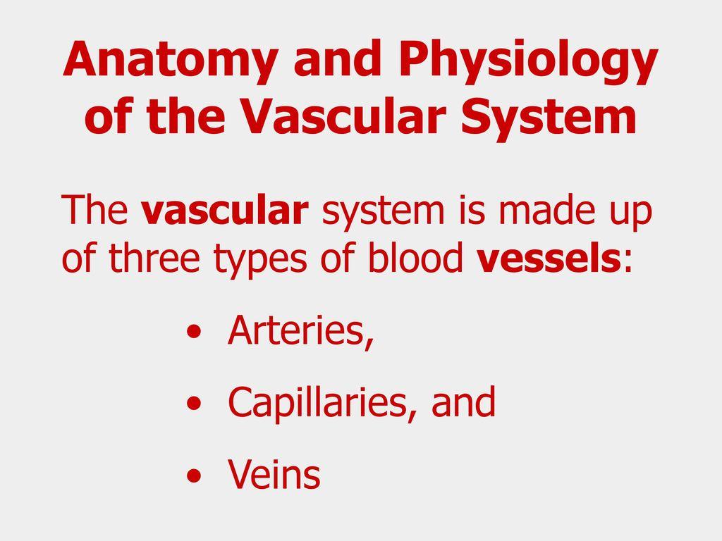 Awesome Vascular Anatomy And Physiology Festooning - Anatomy Ideas ...