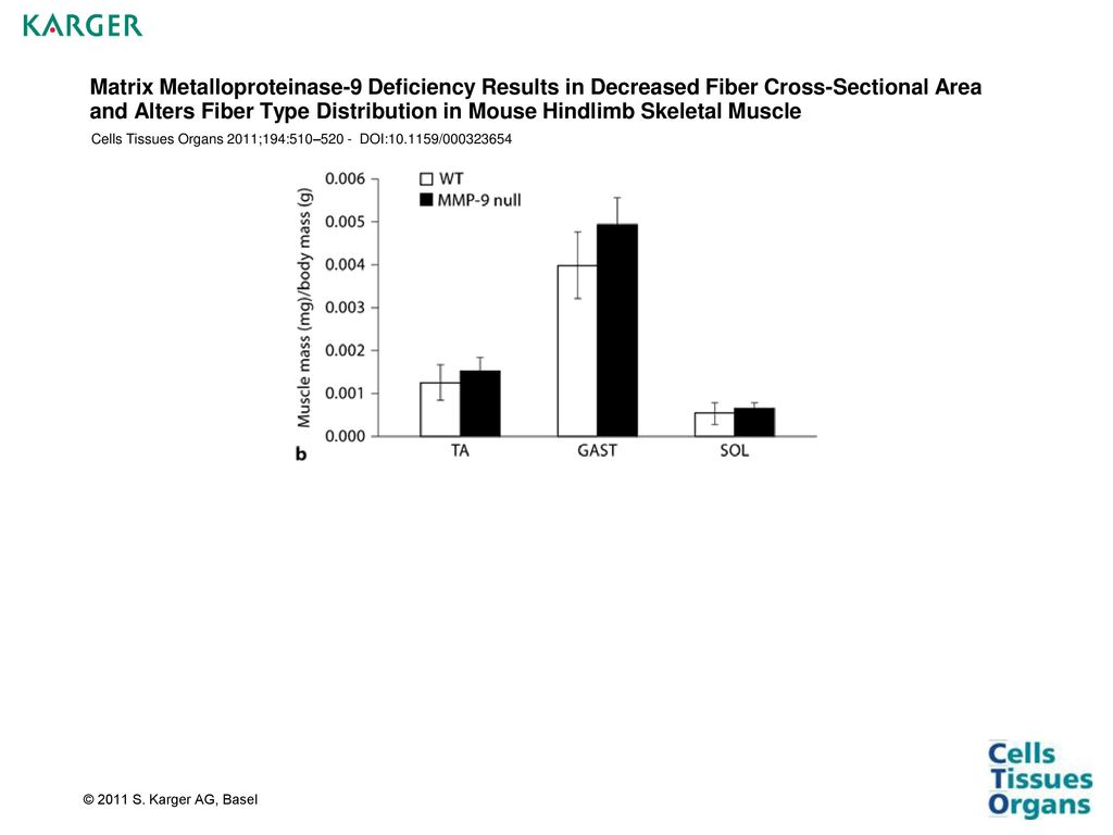 Matrix Metalloproteinase 9 Deficiency Results In Decreased Fiber